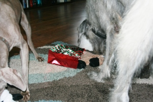 Carley and Ripley check out their gift bags.
