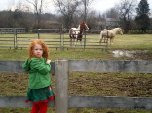 We tried throwing carrots, but the horses just wouldn't come any closer.